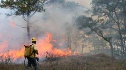 Controlado en un 60% incendio forestal en Tulum