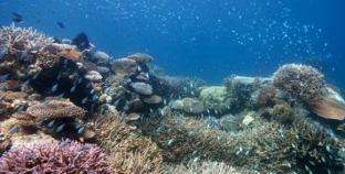 En estado crítico algunas partes del arrecife mesoamericano