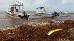 Piden náuticos se intensifique la limpieza de playas