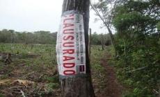 """Clausuran predio """"El Tejón"""", por afectación  de  vegetación forestal"""