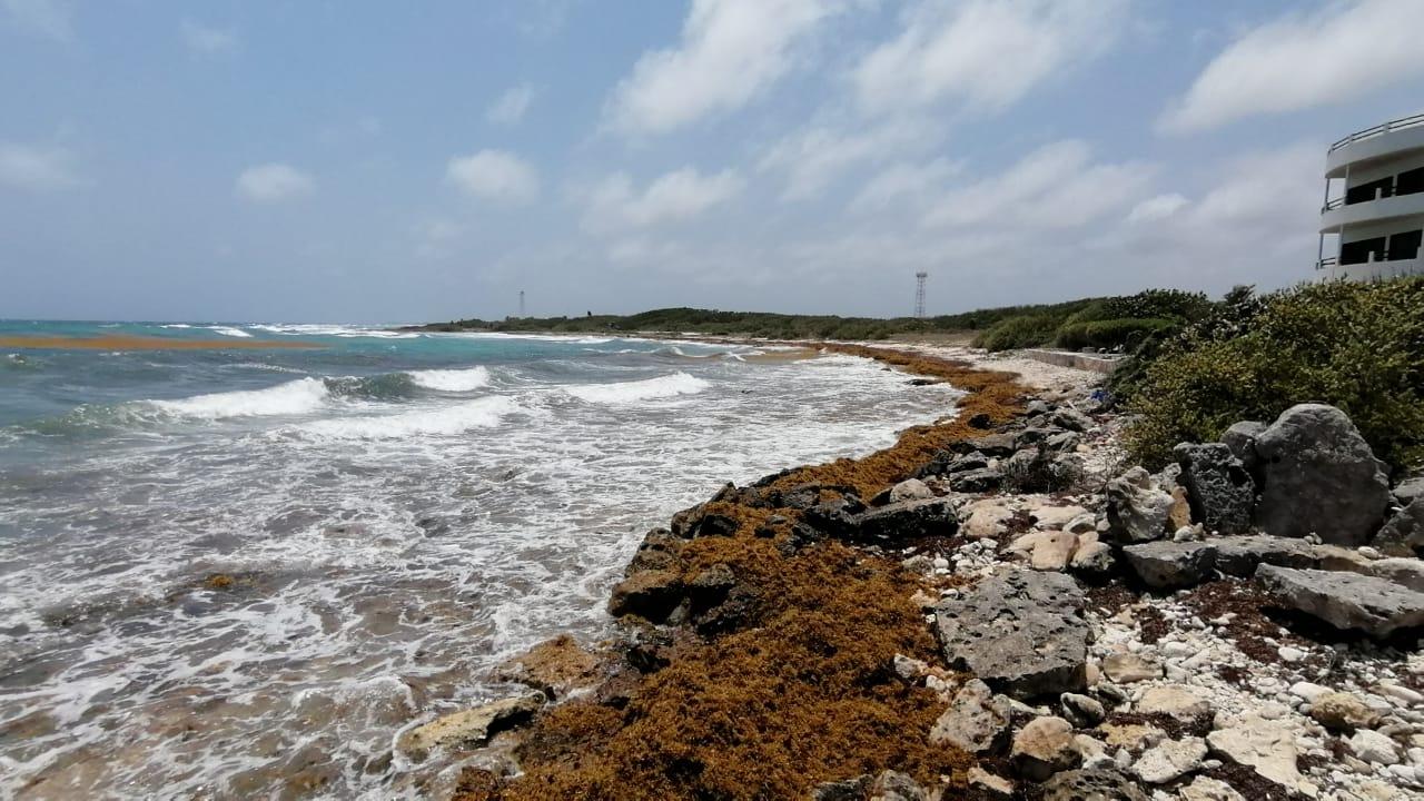 Sargazo empieza a cubrir la línea costera de Mahahual - La Pancarta de  Quintana Roo